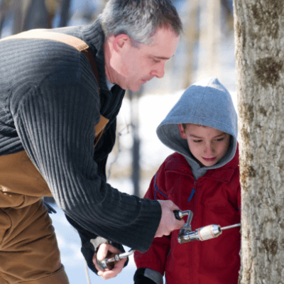 A father and son tap a healthy maple tree thanks to Alliance Landscaping tree and shrub care services in New Hampshire.