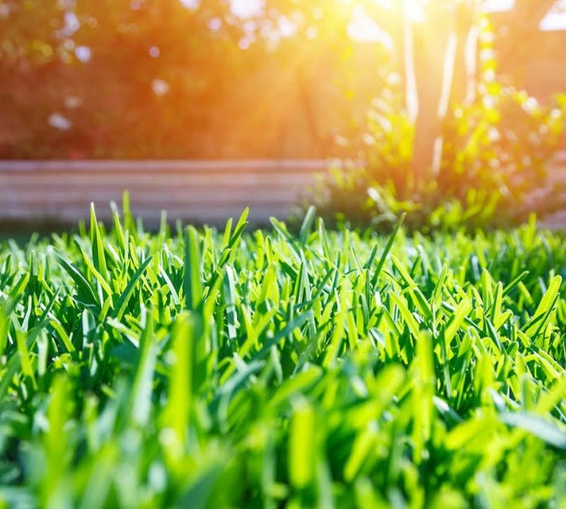 If you want to have a beautiful lawn all year then summer lawn care is a must for your Londonderry, NH property.