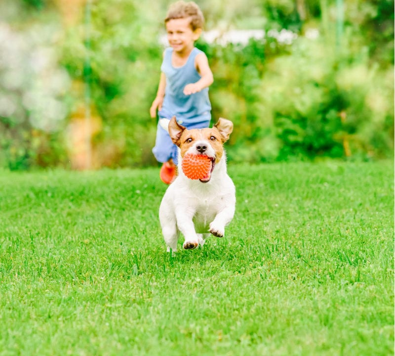 After a summer of play for your kids and pets, your Bedford, NH lawn is in need of some lawn restoration services from Alliance Landscaping.