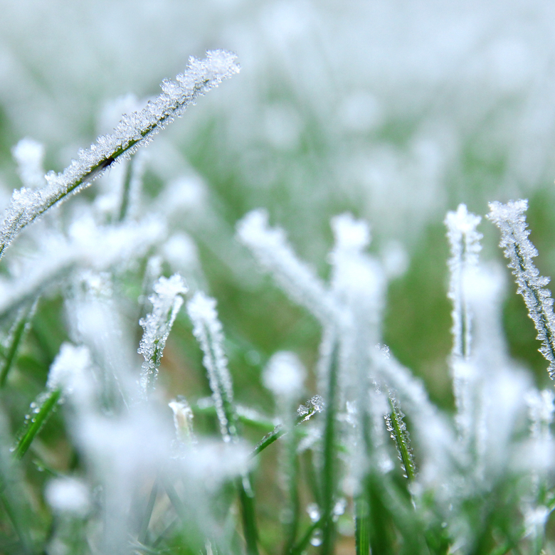 Winter-Watering-for-Lawns
