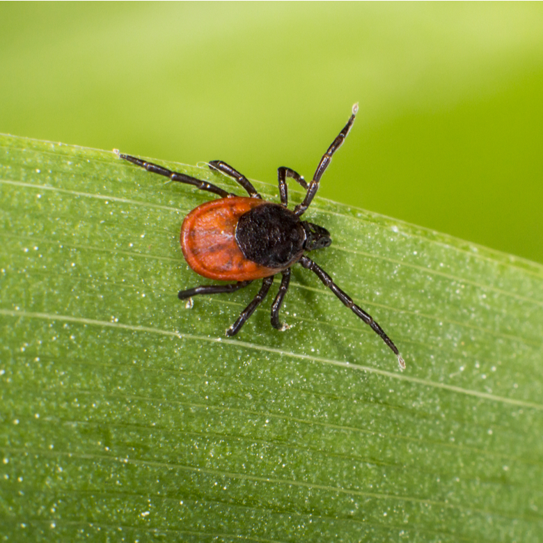 tick and insect control in concord nh