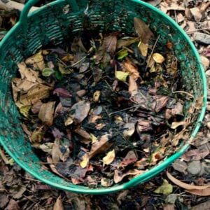 Leaf removal is essential to winter lawn preparation and composting is one of the best things you can do to your leaves here in Londonderry, NH.