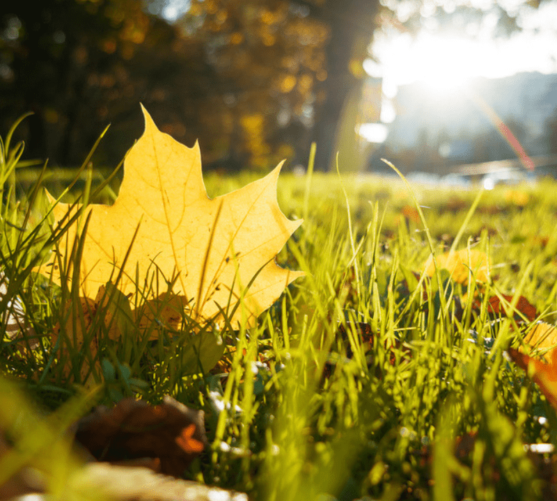 Winter lawn preparation will help you set your lawn up for success this winter and protect it from damage.