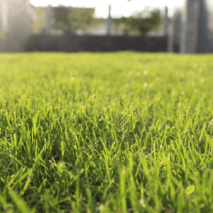 Getting on a lawn fertilization schedule will ensure your Manchester, NH lawn will be healthy and beautiful thanks to the unique holiday gift of lawn care.