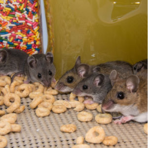 Keep mice out of your pantry by following through with your 2020 home pest control strategy.