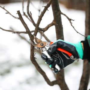 tree trimming winter